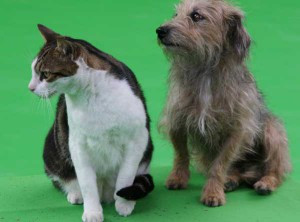 Union_Pictures_Cat_and_Dog