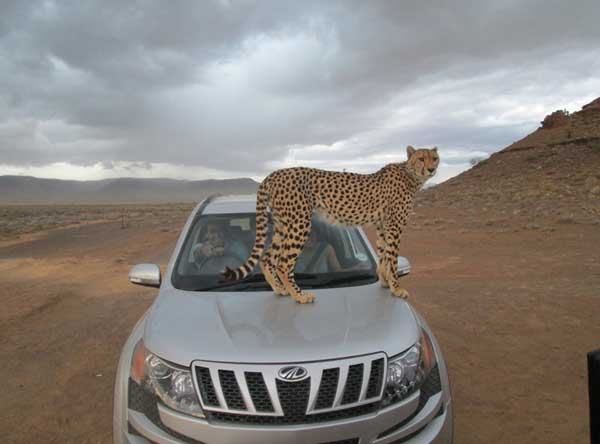 Union_Pictures_Cheetah_08