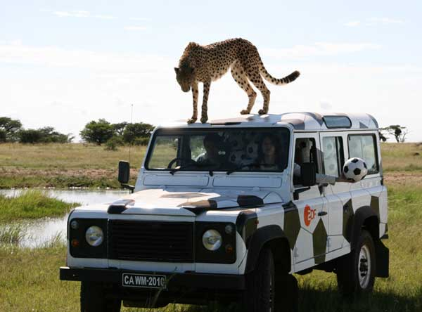Union_Pictures_Cheetah_13