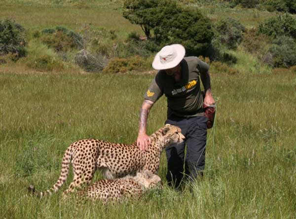 Union_Pictures_Cheetah_22
