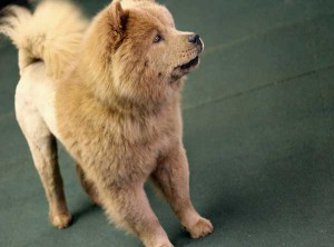 Union_Pictures_Dog_Chow_01
