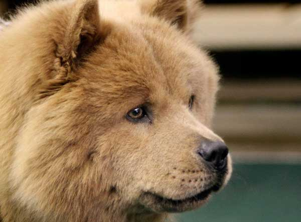 Union_Pictures_Dog_Chow_02
